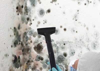 Property-Maintenance-Mold-Removal